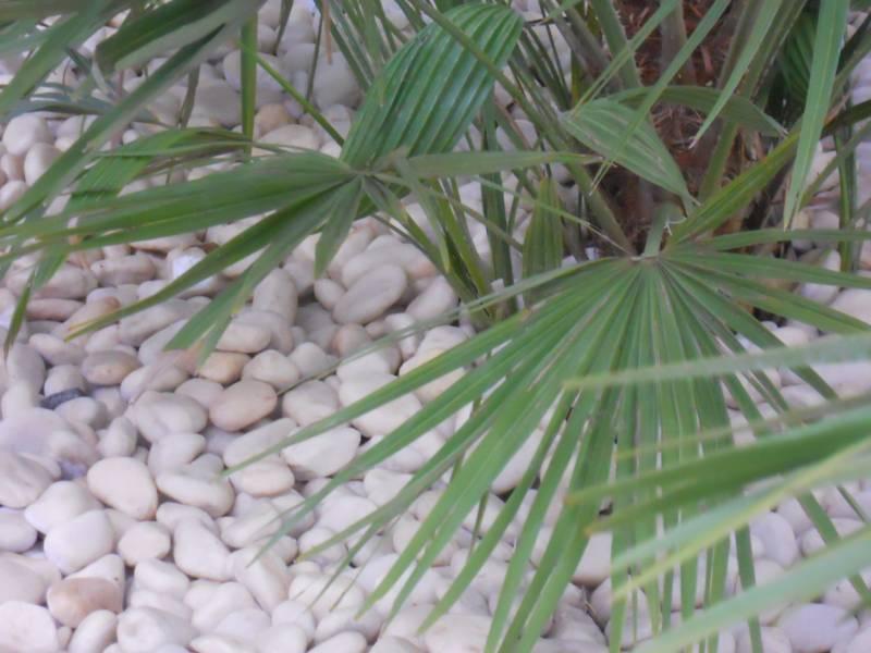 Piedra blanca decorativa jardín