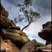 Brimham Rocks by Tom Holmes
