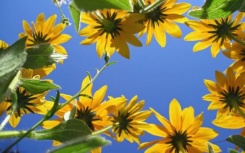 Blumen by O.I.S.