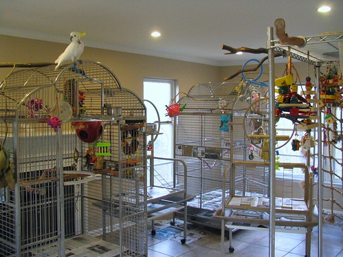 Bird cages large cockatoo cage setups discount parrot for Birdcage bedroom ideas