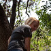 Stuck in a tree by ApplesInMyBra