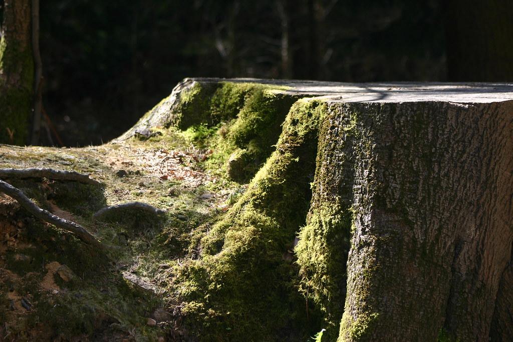 Mossy Treestump