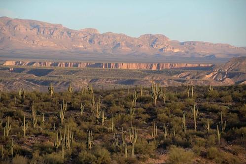 arizona usa mountains cacti landscapes flickr desert unitedstatesofamerica gps 2011 panoramio saguarocactuscarnegieagigantea camcanonrebelt3i