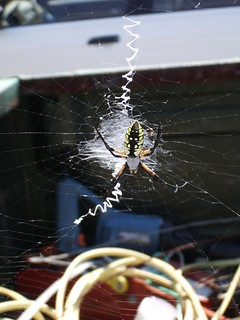 spider-2005-09-11b