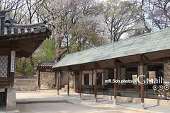 창덕궁/昌德宮/Changdeokgung/후원/後園/비원/祕苑