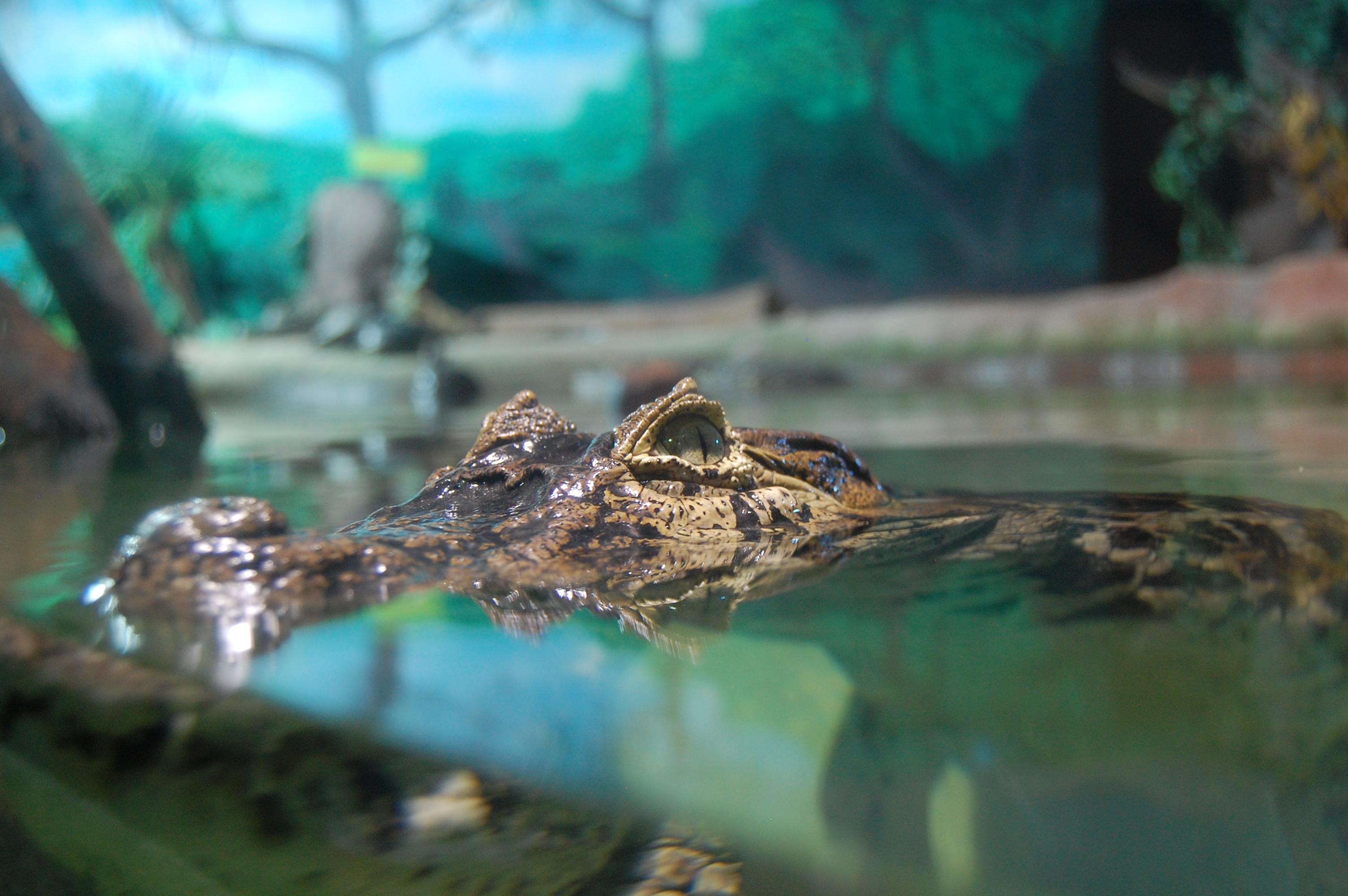 Aquario de Sao Paulo Flickr - Photo Sharing!
