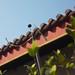 Small photo of Wind vane