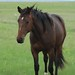 2009 Bay Filly