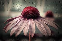 FELIZ QUINTA FLOWER!!! by RETALHOS DE DOÇURA ♥