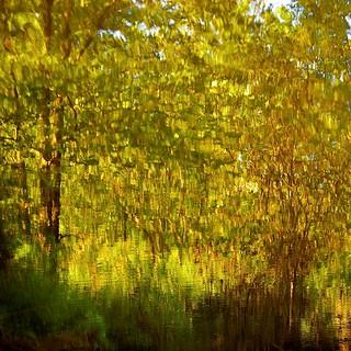 Mille feuilles...!!!