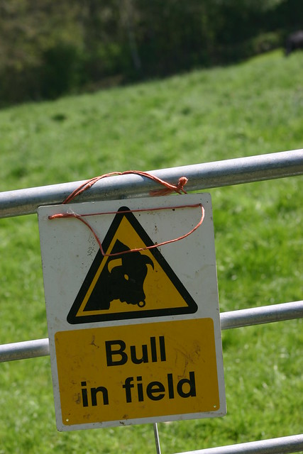 Bull in field top right