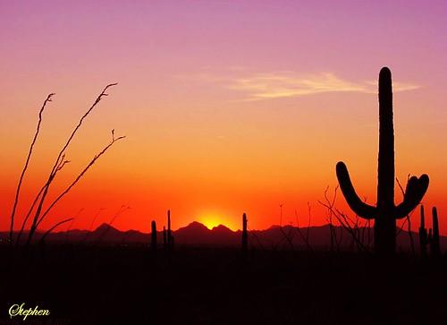 sunset arizona cactus saguaro