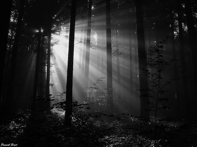 rayons de soleil dans la foret de Myon ** sunrays in the forest of Myon **