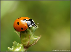 Thumbnail image for Should You Buy Lady Bugs for Your Container Garden?