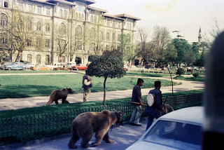 bear trainers in Istanbul 1977
