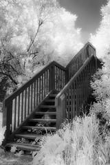 Le monte-peine/The Sorrow Lift/La esacalera de pesares