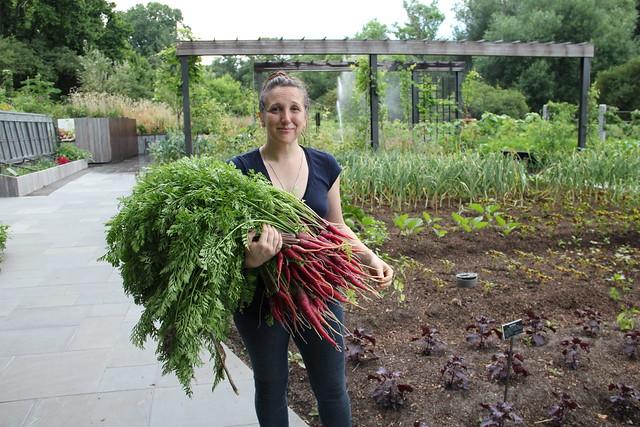 Ariel Nadelberg harvests for BBG's Terrace Cafe. Photo by Rebecca Bullene.