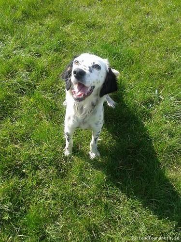 Sat, Apr 19th, 2014 Found Female Dog - R154, Meath
