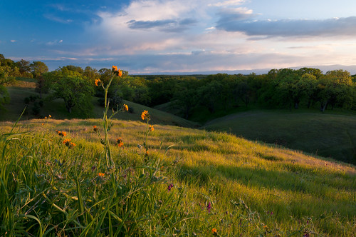 ca sunset landscape evening spring hills pasture bluehour rollinghills grasslands redbluff fiddleneck nothdr vetche