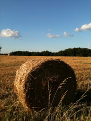 hay bail in a field 2