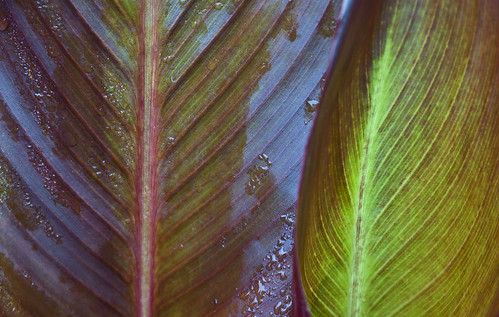 watercolor leaf florida veins highway30a