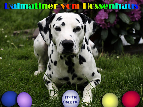 Frohe Ostern 2012! by Dalmatiner vom Hossenhaus