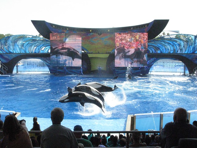 """One Ocean"" debut at SeaWorld Orlando"