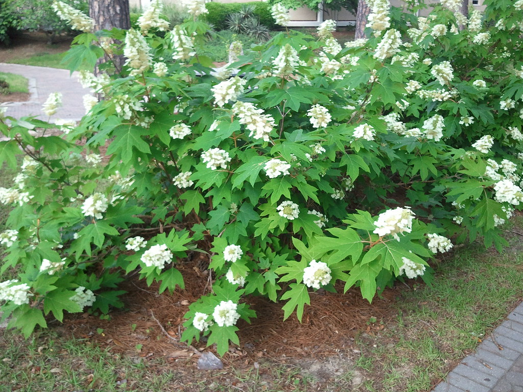 Outdoor flowering plants outdoor flowering all seasons for Outside plants and shrubs