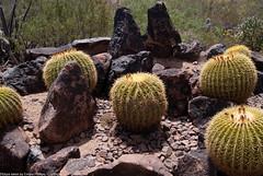 desert_botanical-31
