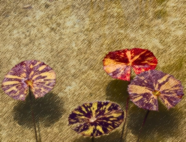 Lily Pads- Japanese Art Version