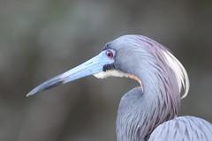 Tierra Verde, FL Wildlife