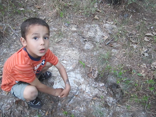 Joseph shows us a native gopher tortoise burrow. (These turtles are endangered.)