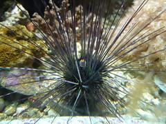 fish(0.0), flower(0.0), leaf(0.0), plant(0.0), animal(1.0), sea urchin(1.0), nature(1.0), marine biology(1.0), invertebrate(1.0), macro photography(1.0), flora(1.0), close-up(1.0), wildlife(1.0),