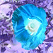 Poppy Inverted