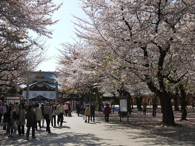 Sakura at Yasukuni Shrine