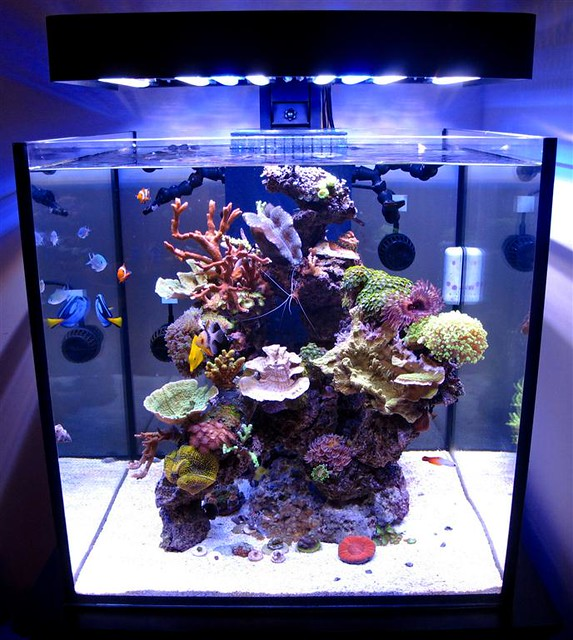 solanaxl60 aquarium lit with panoramaledfixture flickr. Black Bedroom Furniture Sets. Home Design Ideas
