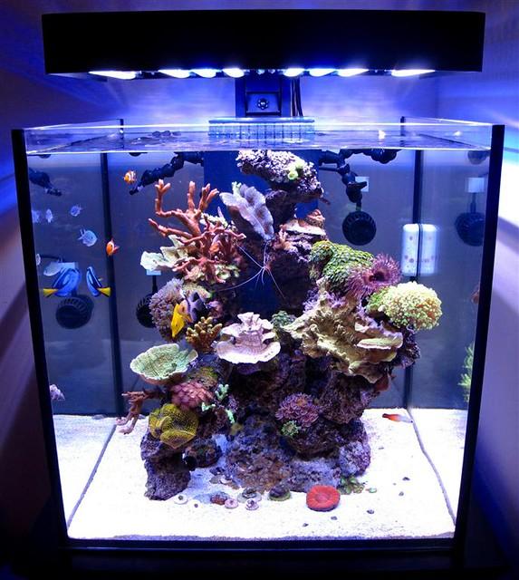 solanaxl60 aquarium lit with panoramaledfixture flickr. Black Bedroom Furniture Sets. Home Design Ideas