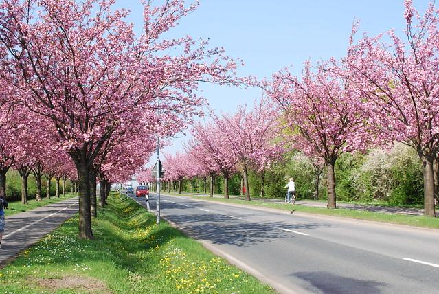 Holzweg in Magdeburg