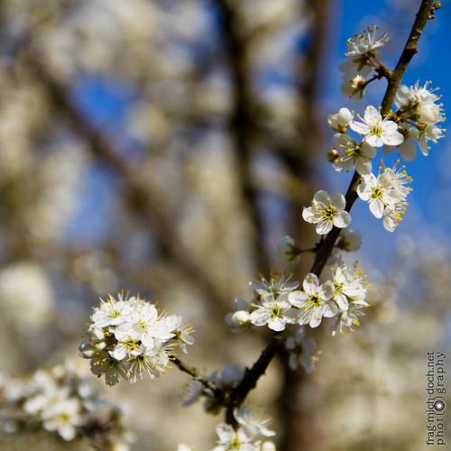 Frühling_02