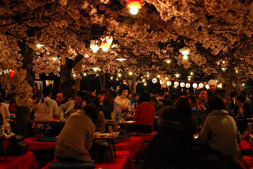 Hanami in Maruyama Park Kyoto