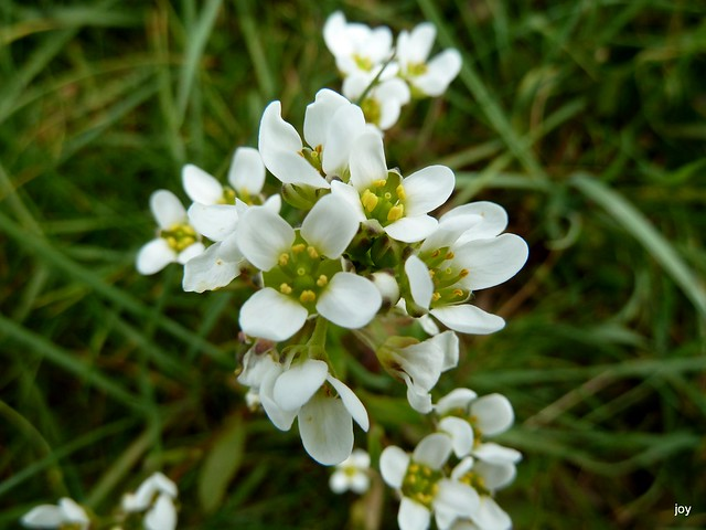 Salt Marsh plant | Flickr - Photo Sharing!