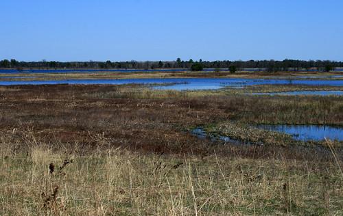 wisconsin midwest creativecommons wetlands wi usfws wetland refuge nationalwildliferefuge fws necedah nwr usfishandwildlifeservice