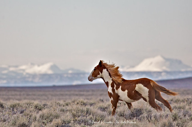 Running With The Wyoming Wind | Flickr - Photo Sharing!