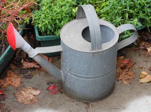 Trusty Watering Can
