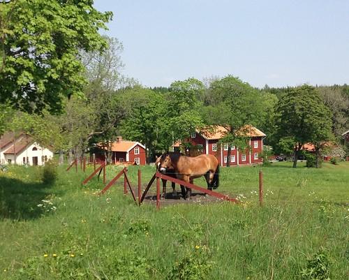 sweden nora idyll midsommar hage landskap turist hästar restaurang tåg bergslagen pershyttan grönska