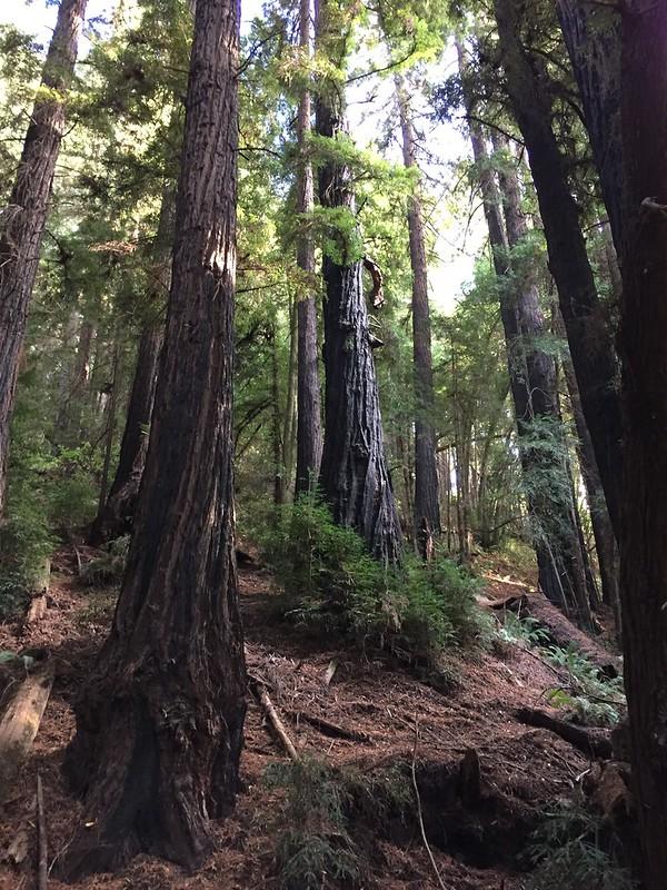 Roy's Redwoods Preserve