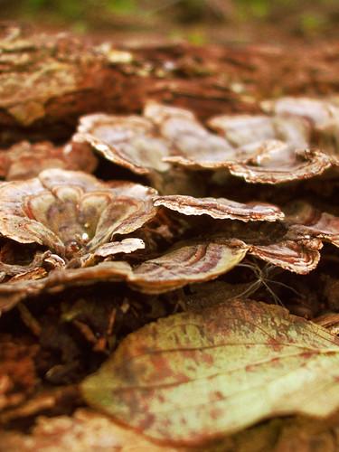 Fungus III by amandaschroeder