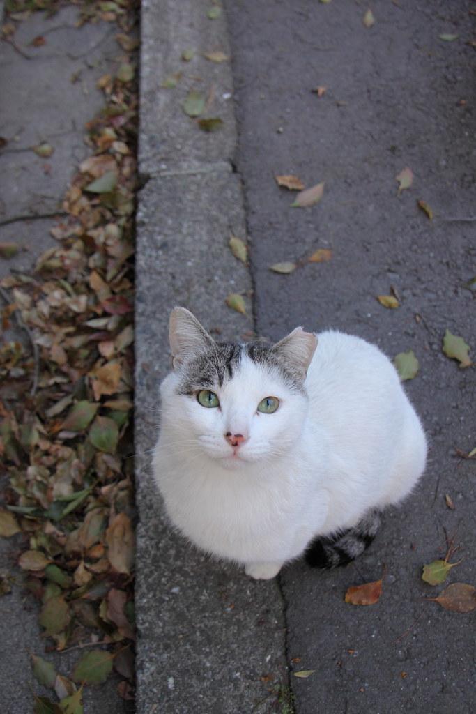 見上げる猫 1