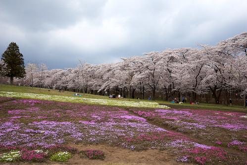 AKG_2012-04-19_039