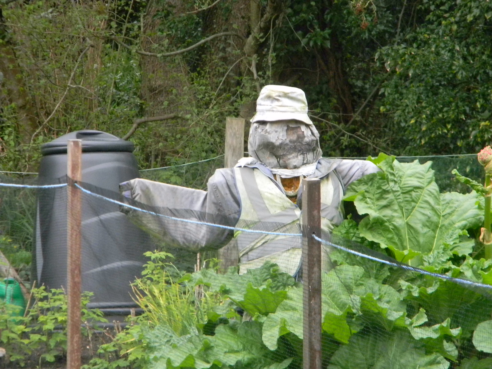 Scarecrow, Shere Guildford to Westhumble